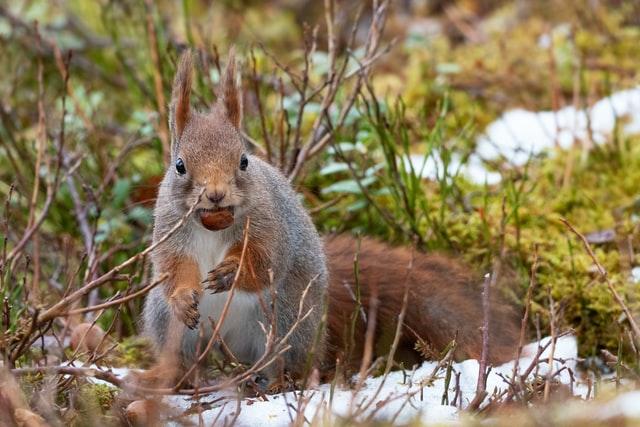 Can squirrels eat pistachios?